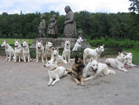 LETNÍ VÝCVIKOVÝ TÁBOR 2007 - SPOLEČNÉ FOTO