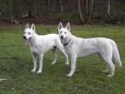 Thorr a Eimy